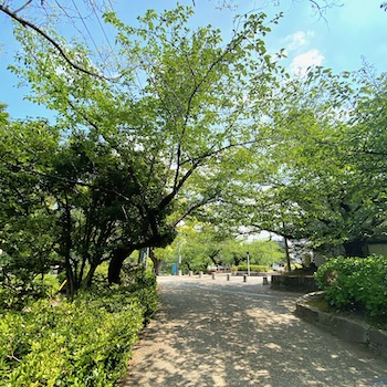 公園ランニング